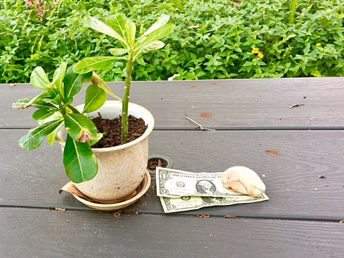 When you leave money anonymously, you will be more richly rewarded.